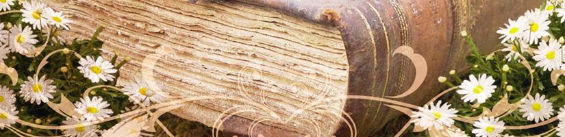 Ladies Bible Study Banner Image